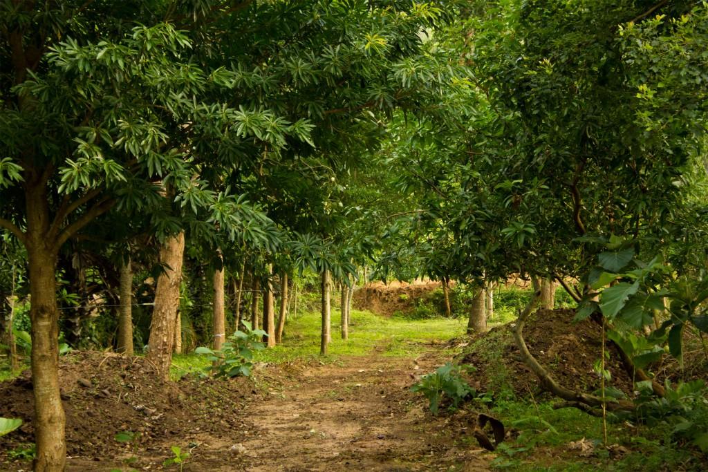 Thadam Experiences, Pollachi, Farming, Nature Farming, Organic Farming, Village Tours, Santhosh Farms, Mathurama Krishnan, Pollachi, Aliyar,