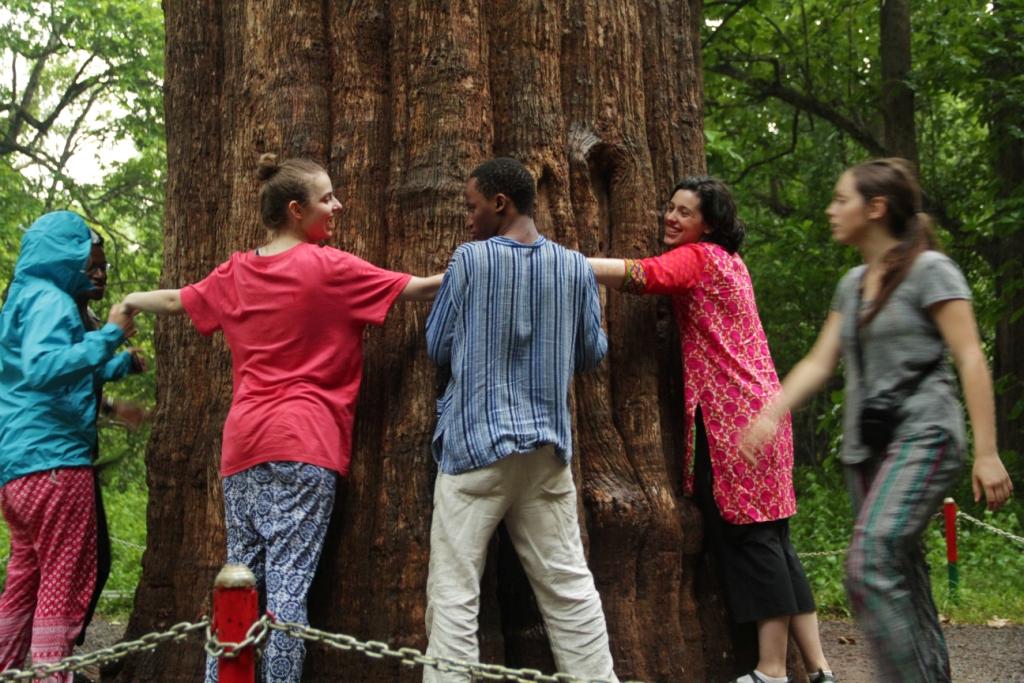 Kannimara Teak   Credits - Pravin Shanmughnandam