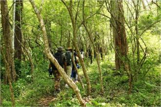 Topslip, pollachi, tourism, pollachi papyrus, wildlife, trekking, leopard, thadam experiences