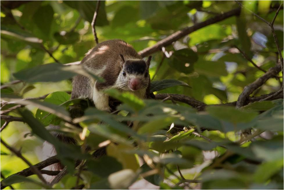 Thadam Experiences, Pollachi Papyrus, Chinnar, Munnar, Thoovanam Trek, Chinnar Trek, Munnar Trek, Thoovanam Waterfalls, Shola Heaven, Chinnar Wildlife Sanctuary