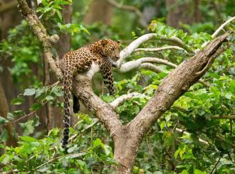 Kabini wildlfie tour, kabini, leopard, , thadam experiences, Pollachi, Coimbatore, photo tour, photography