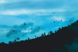 winter migrants, birding, bird watching, pollachi, anamalai tiger reserve, SACON, Dr. Pramod, Osprey, Asian Paradise Flycatcher, Oriole, Golden Oriole, Asian Brown Flycatcher, Tourists, Tourism, Thadam Experiences