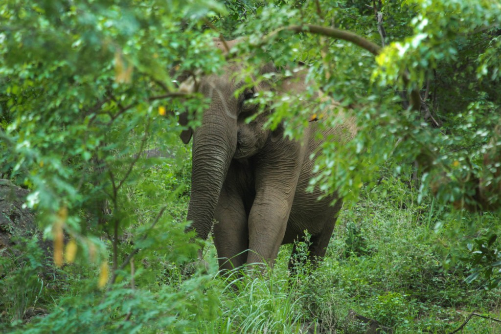 birdwatching, serenity resort, pollachi papyrus, thadam experiences, nature walk, sethumadai, pollachi travel, eco tourism, tour responsibly, elephants