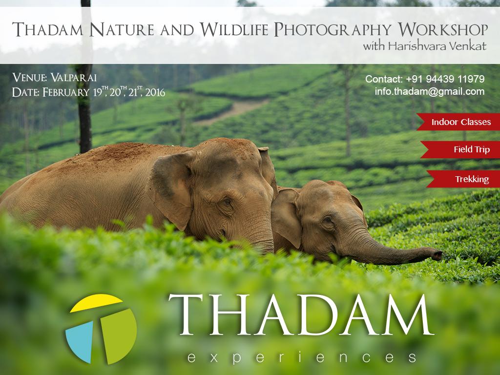thadam nature and wildlife photography workshop, photogrpahy workshop, valparai, nilgiri tahr, polllachi tour, photogaphy tour, nature tour, waterfalls, aliyar, pollachi papyrus, TNWP,