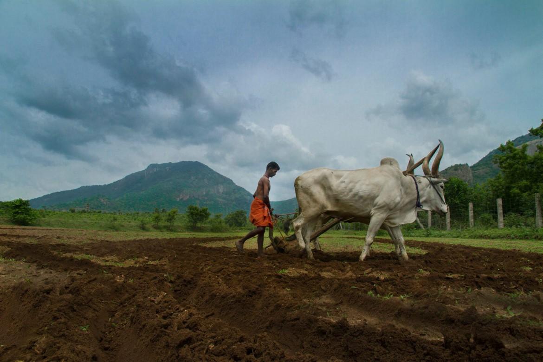 pollachi papyrus, pollachi, monsoon in pollachi, sethumadai, valparai, ploughing, pollachi tourism, places of attraction,