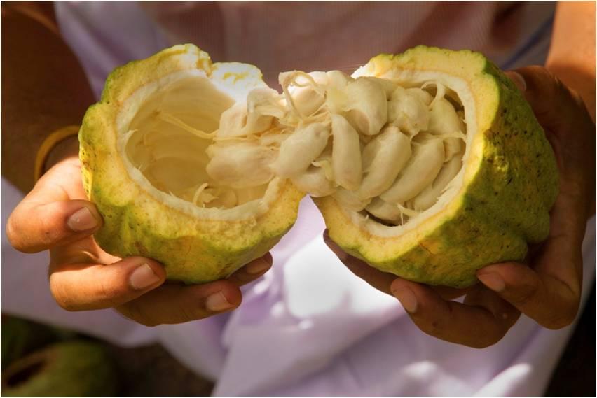 nutmeg, farm tour, thadam experiences, pollachi, day trips, pollachi papyrus, sethumadai, aliyar, organic farming, nature farming