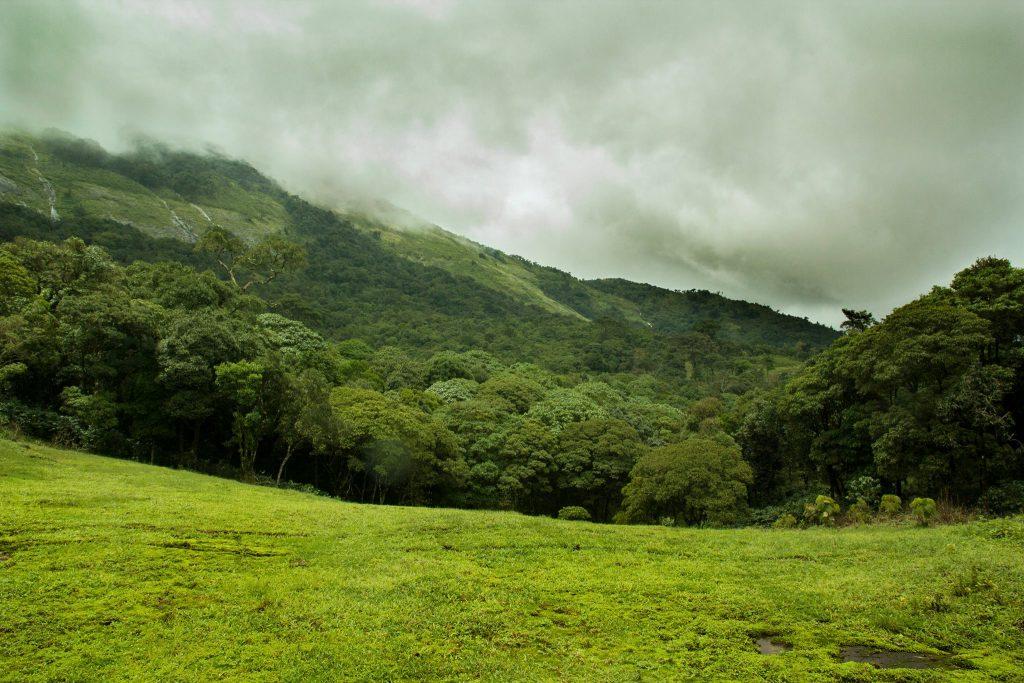 altaghat, ranforest expedition, pollachi papyrus, eco tourism, valparai, thalanar, anamalais, anamalai tiger reserve, eco tourism, trekking, monsoon, herping, wildlife, birding, birdwatching