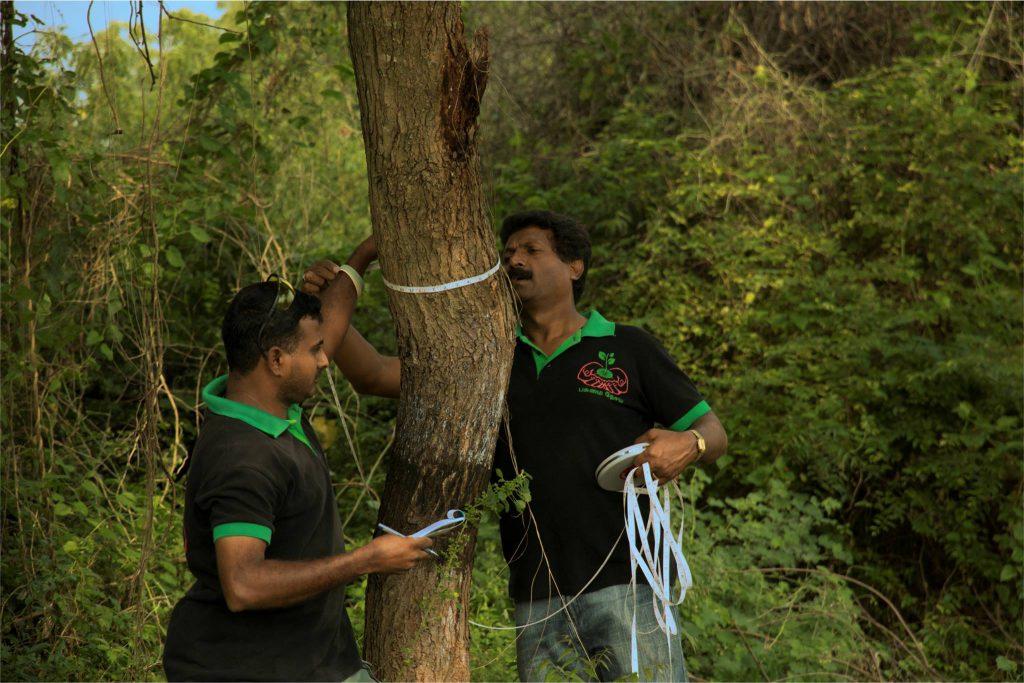 Tree Transplantation Pollachi
