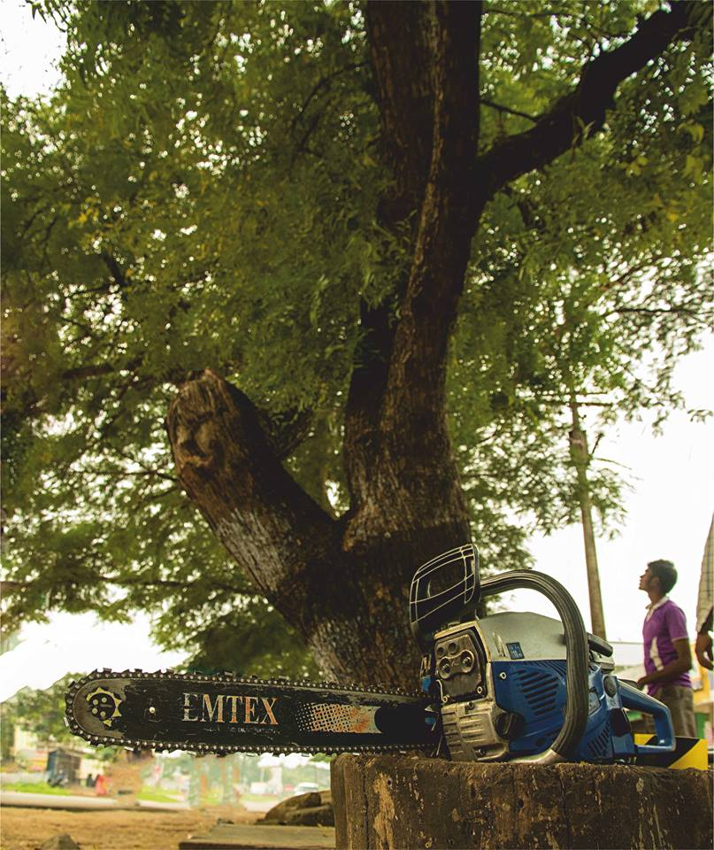 Tree Transplantation Pollachi, coimbatore highway, pollachi papyrus, urban trees, tamarind, neem, transplantation,
