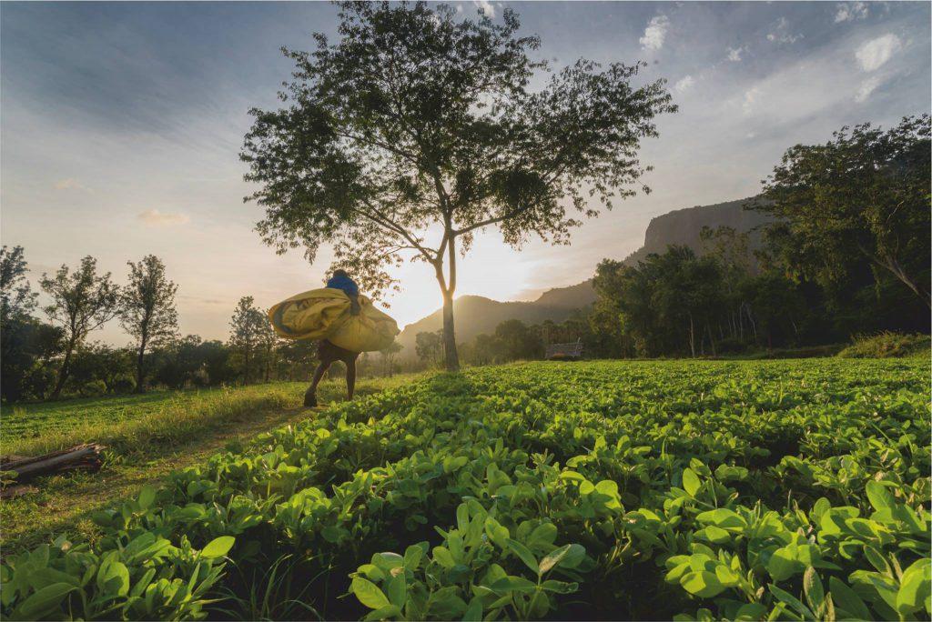 camping, sethumadai, wildlife, pollachi papyrus, thadam experiences, trekking, bird watching, pollachi, valparai, anamalai tiger reserve, thadam experiences, bonfire, groundnut cultivation,