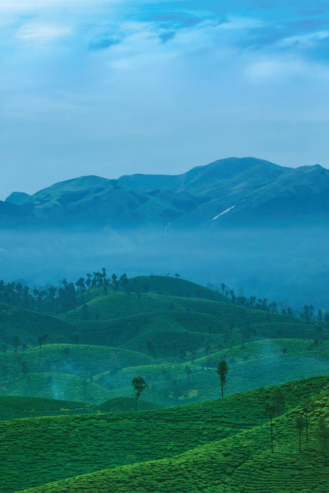 Nallamudi Poonjolai, Nallamudi, Poonjolai, Nallamudi View Point, Valparai, Pollachi, Pollachi Papyrus, Anamalai Tiger Reserve, Anamalais, tea estate, view point, places to see in valparai, place of attractions, pollachi tourism