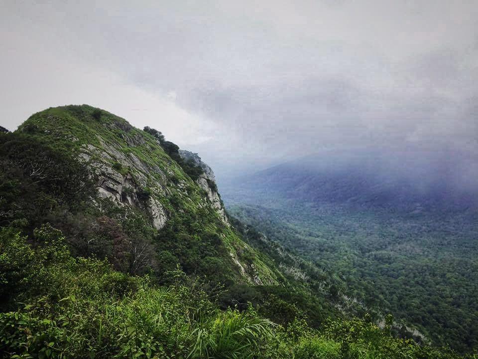 trekking, topslip, anamalais, anamalai tiger Reserve, wildlife, kochi cane turtle, cochin cane turtle, turtle, monsoon, pollachi, pollachi papyrus, thadam experiences